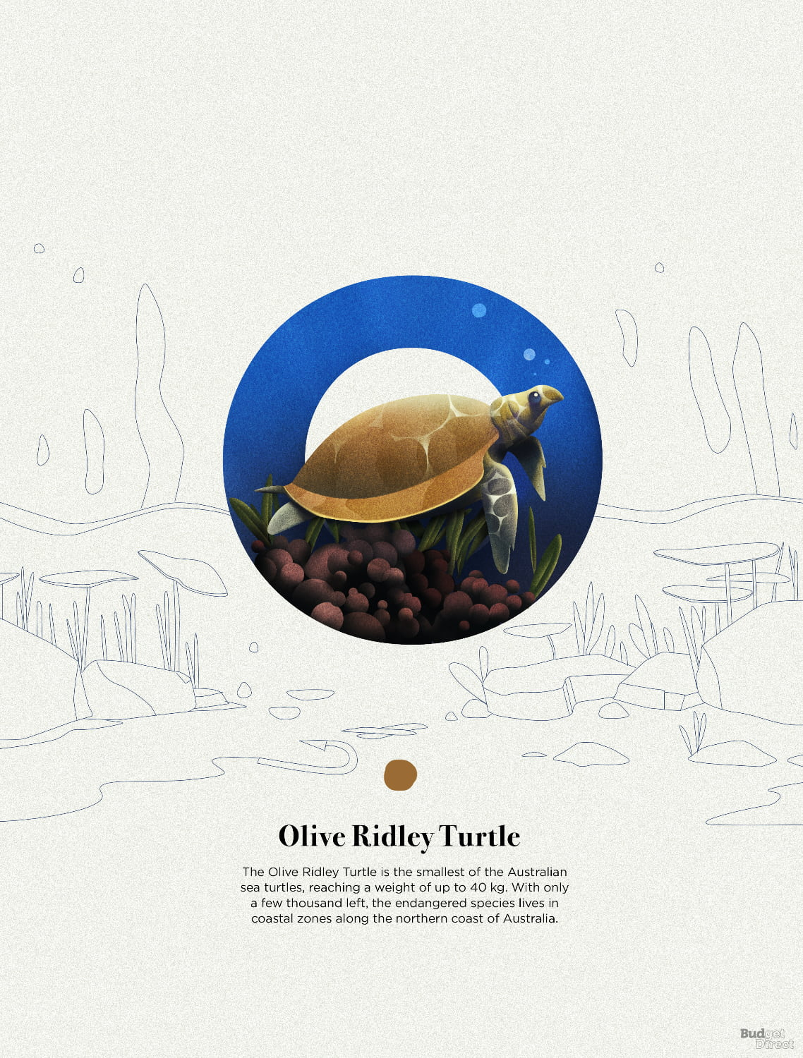 O is for Olive Ridley Turtle