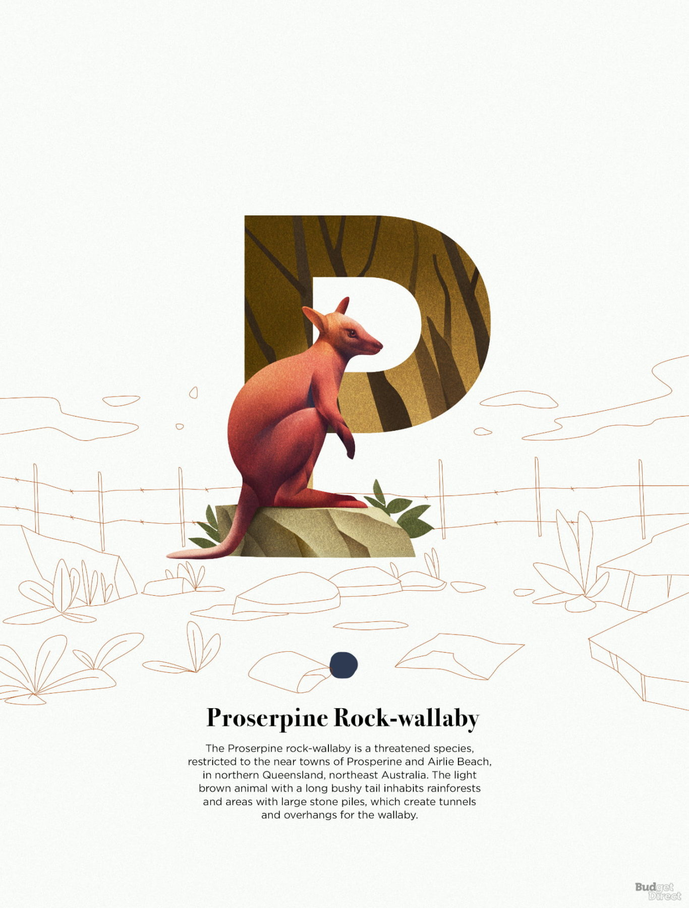 P is for Proserpine Rock wallaby