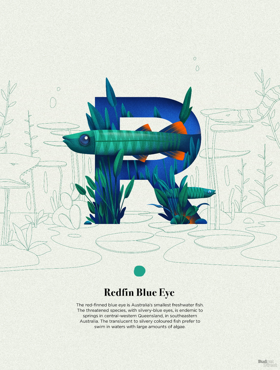R is for Redfin Blue Eye