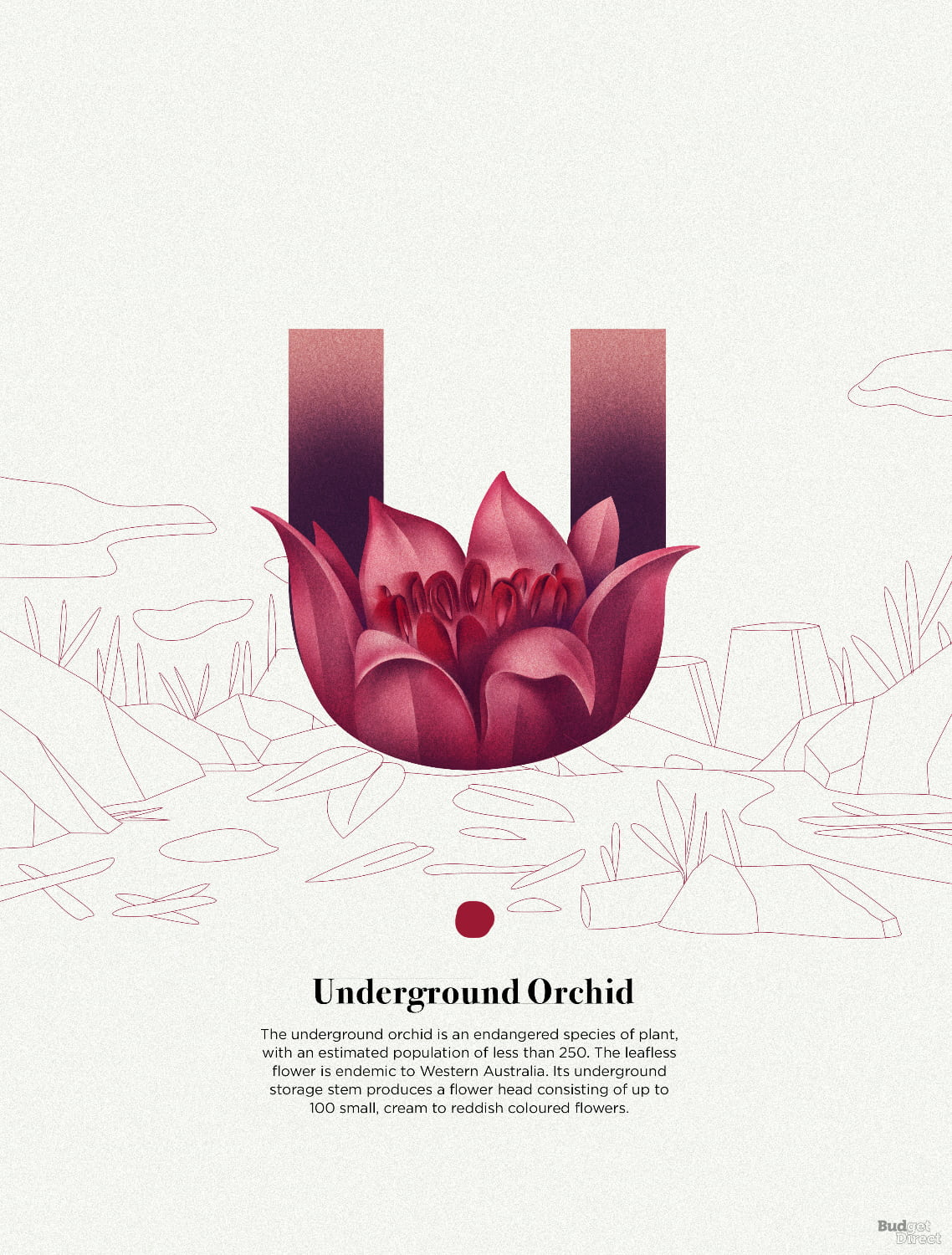 U is for Underground Orchid