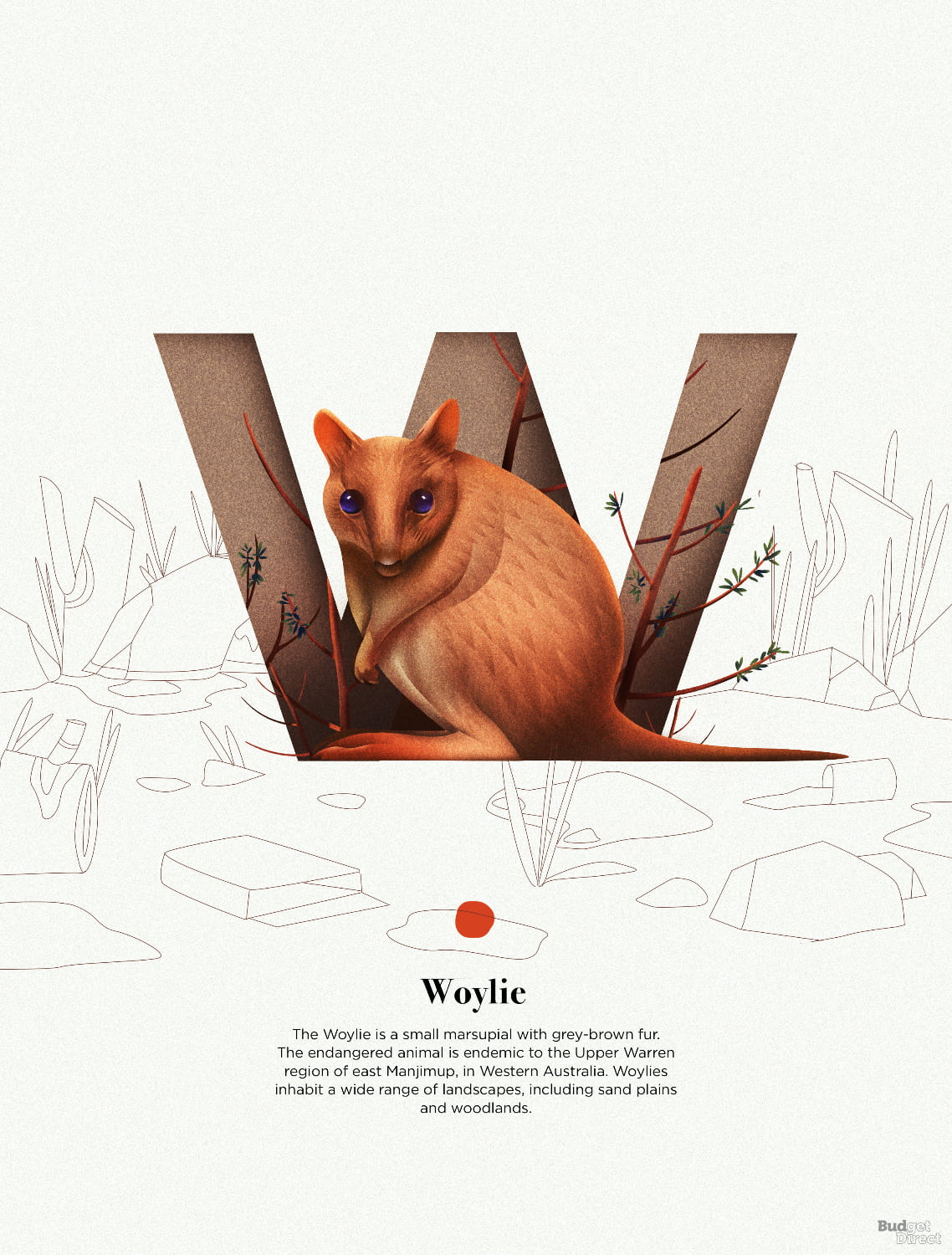 W is for Woylie