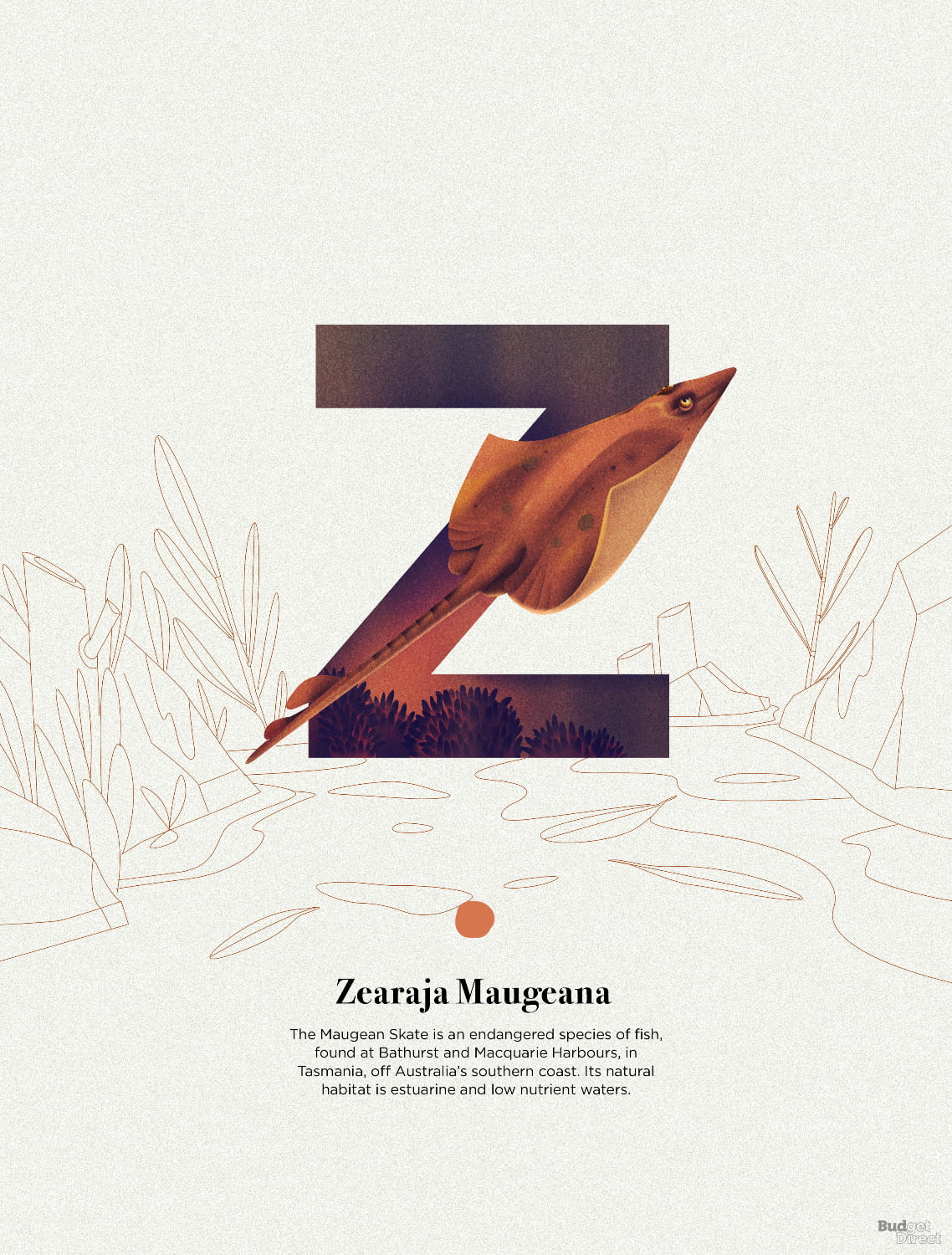 Z is for Zearaja maugeana