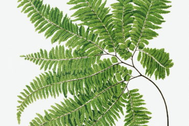 rawpixel Ferns British and Exotic 1
