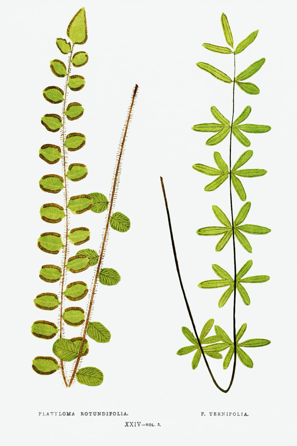 rawpixel Ferns British and