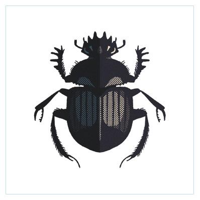 scarabeo sacro