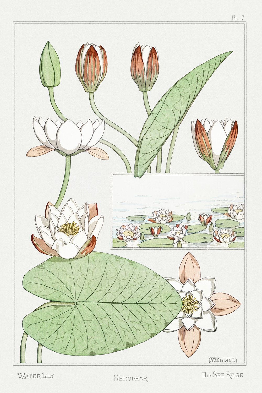 La Plante et ses Applications