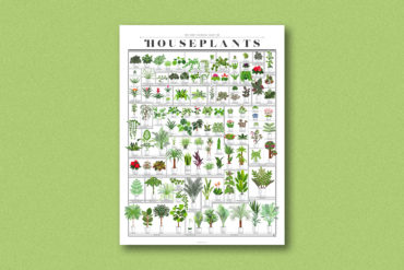houseplants popchart 1