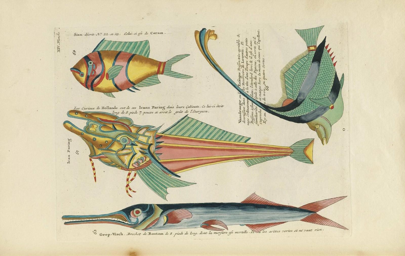 Louis Renard poissons 1