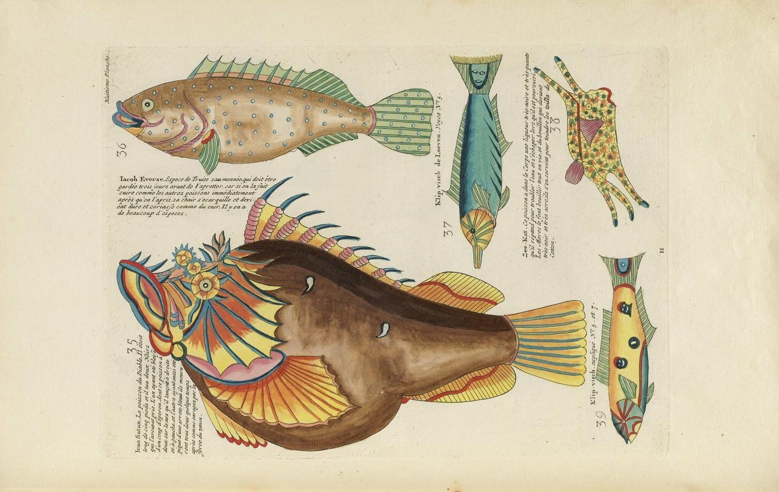 Louis Renard poissons 12