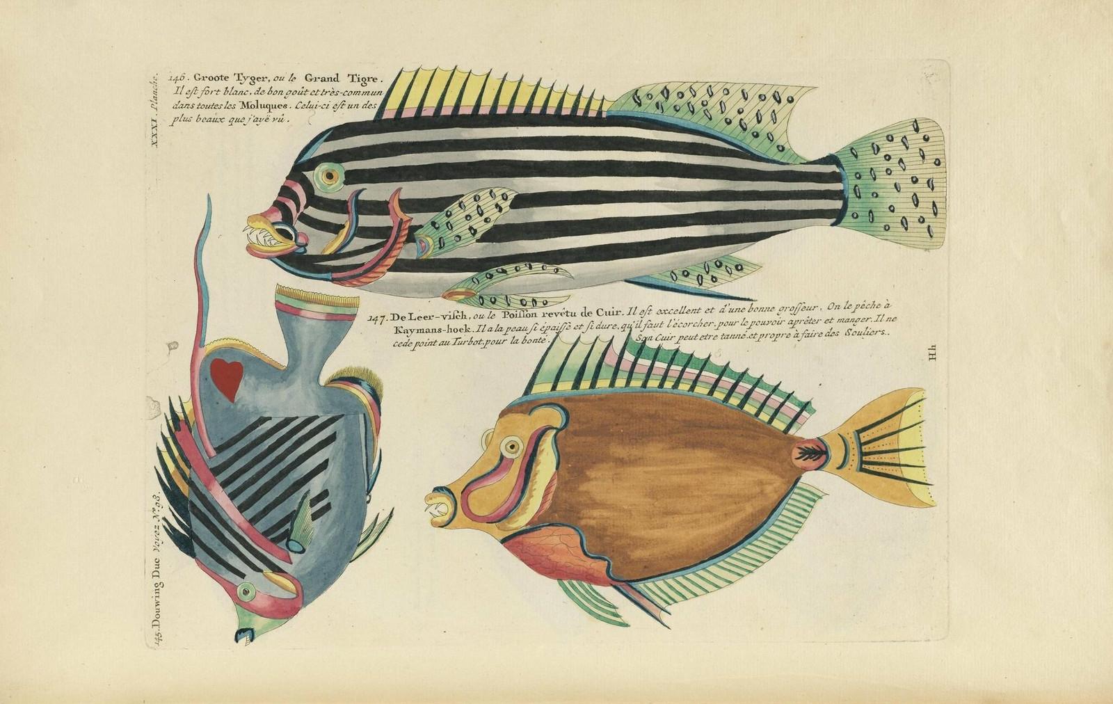 Louis Renard poissons 14
