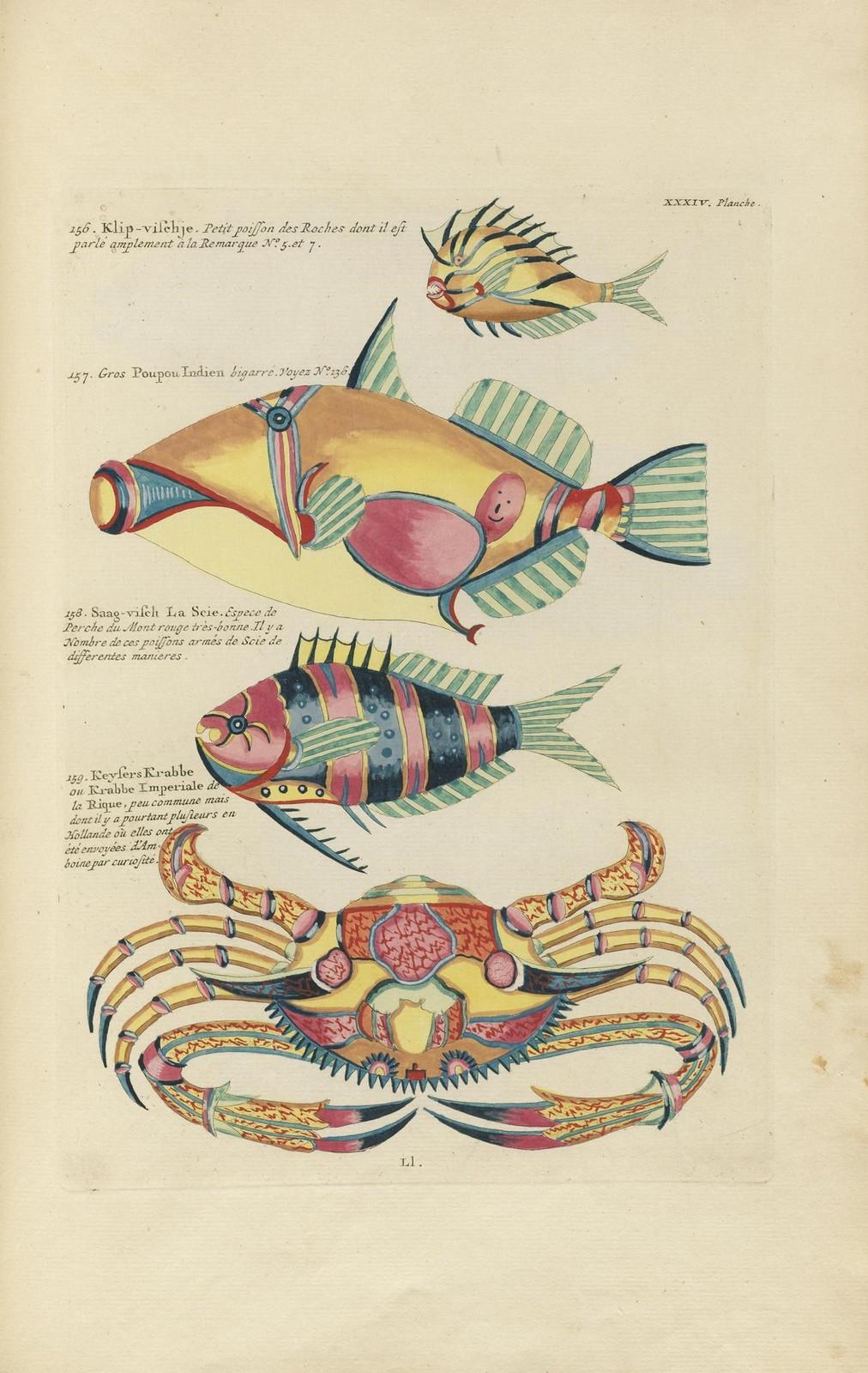 Louis Renard poissons 17