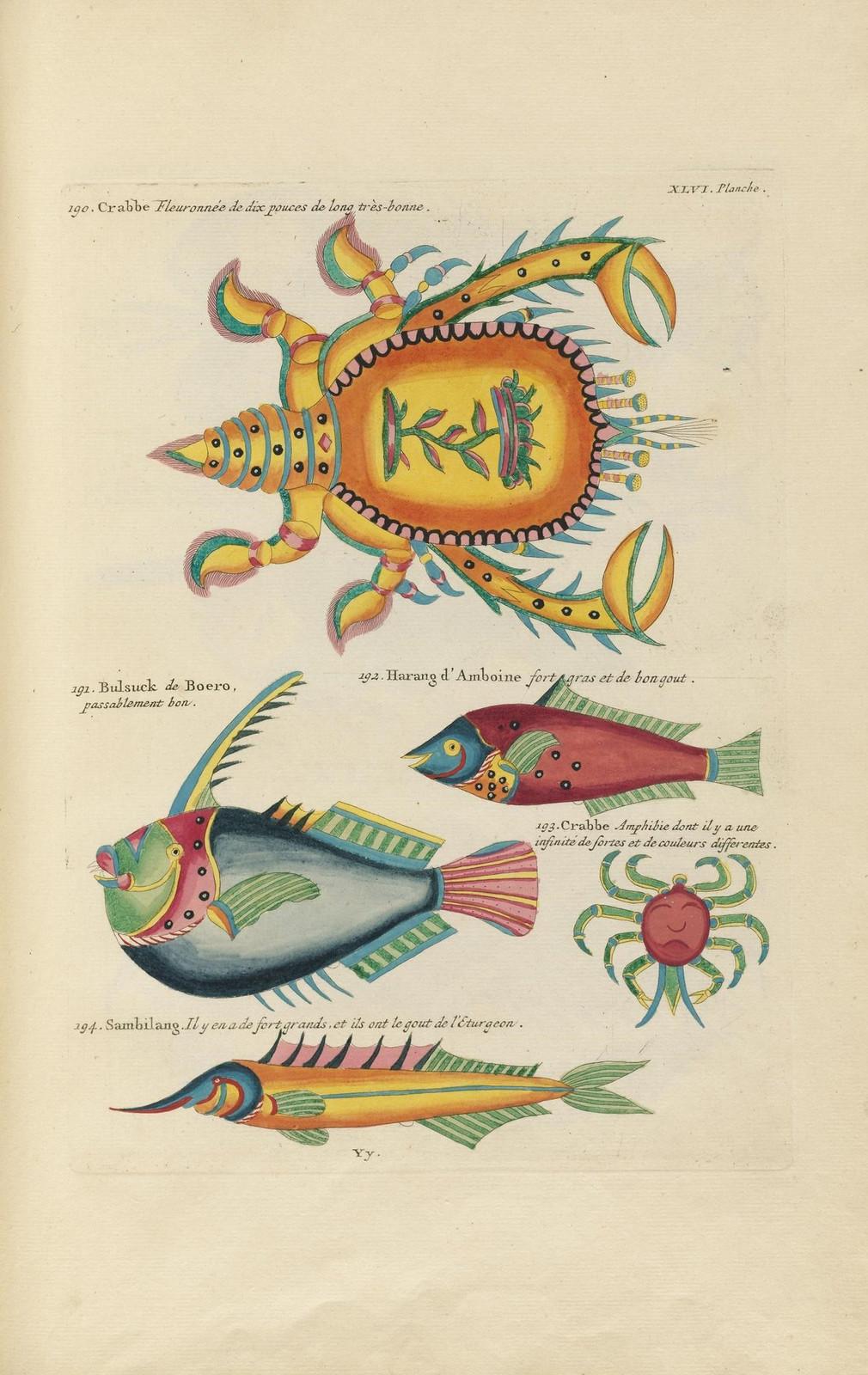 Louis Renard poissons 18