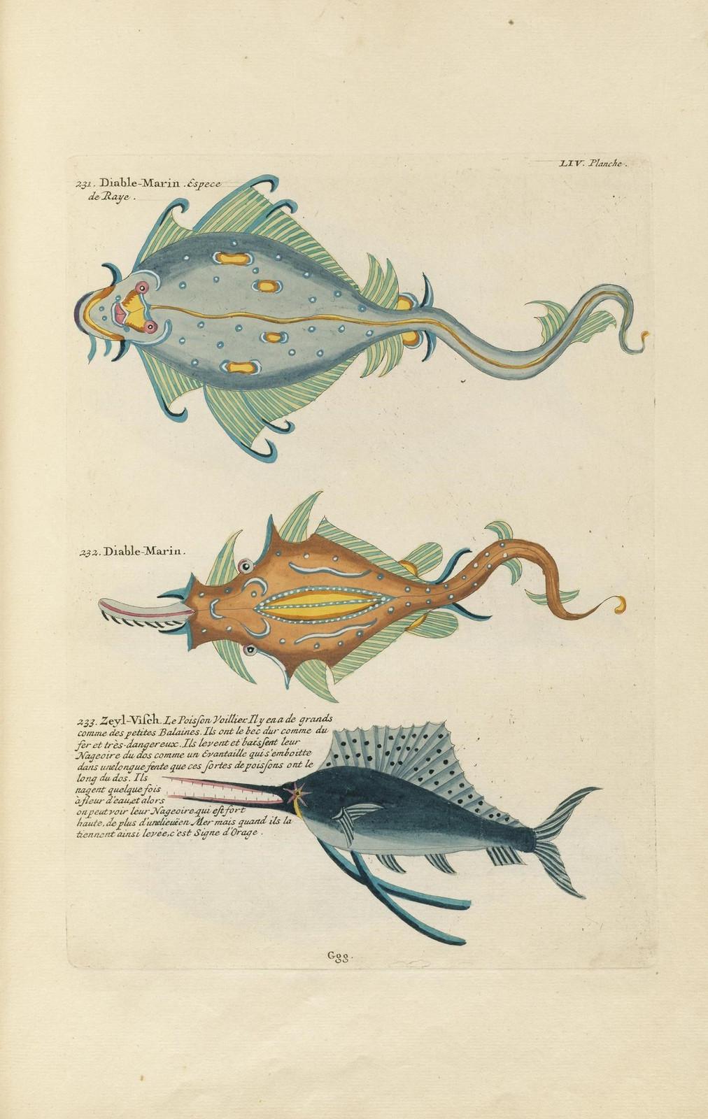 Louis Renard poissons 20