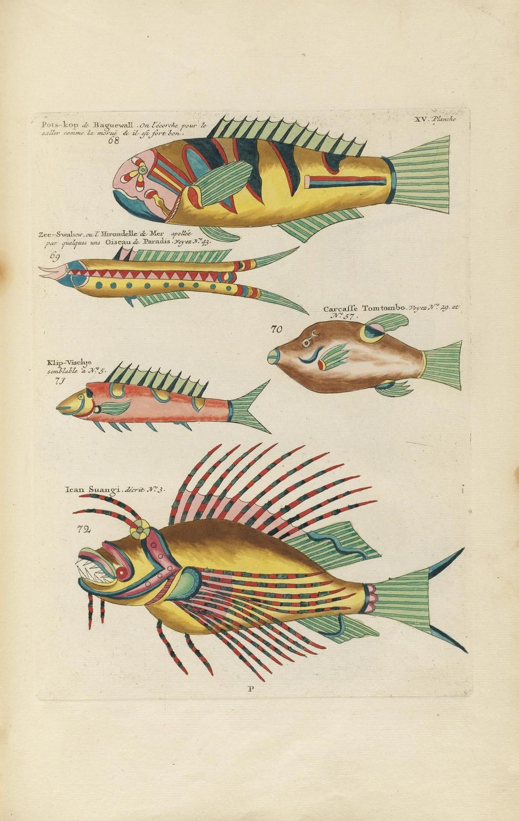 Louis Renard poissons 3