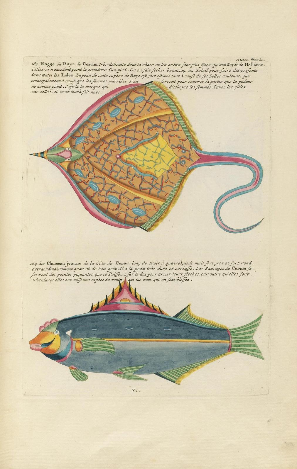 Louis Renard poissons 4