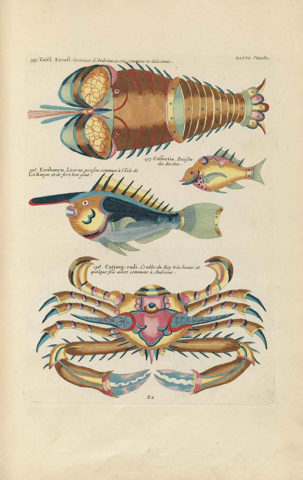 Louis Renard poissons 5