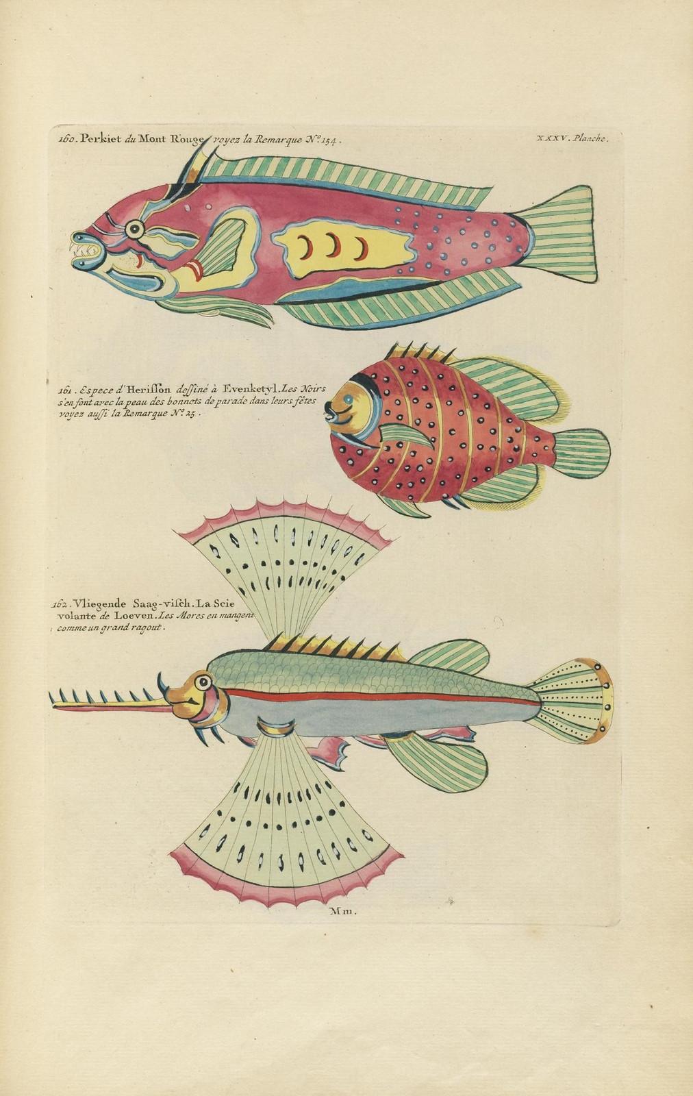 Louis Renard poissons 6