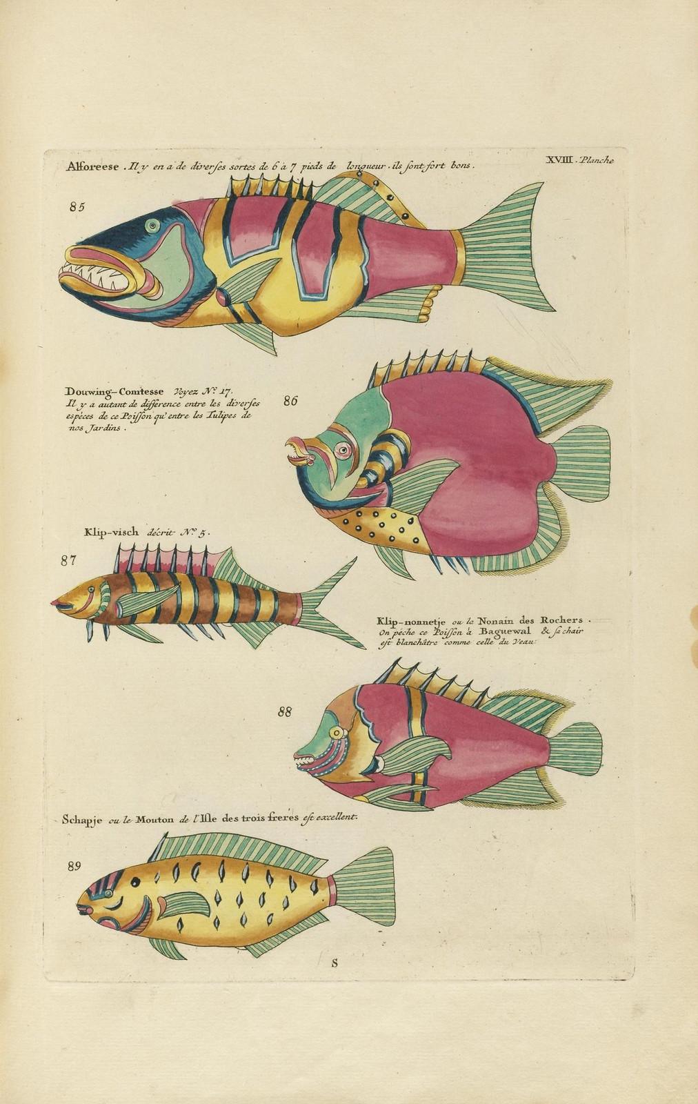 Louis Renard poissons 9