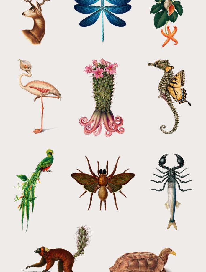 study of the creative specimens 1