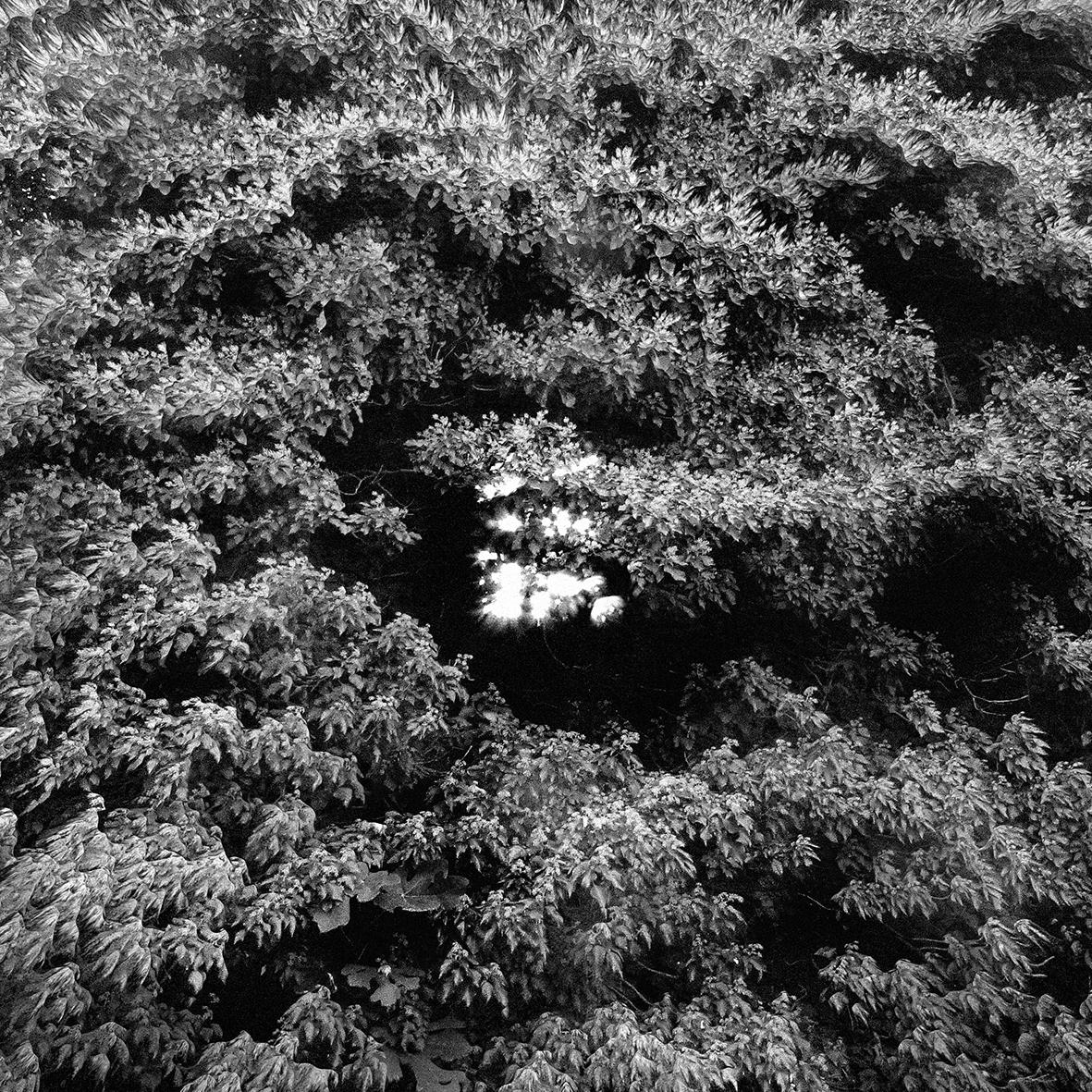 albartcreator blackholesun