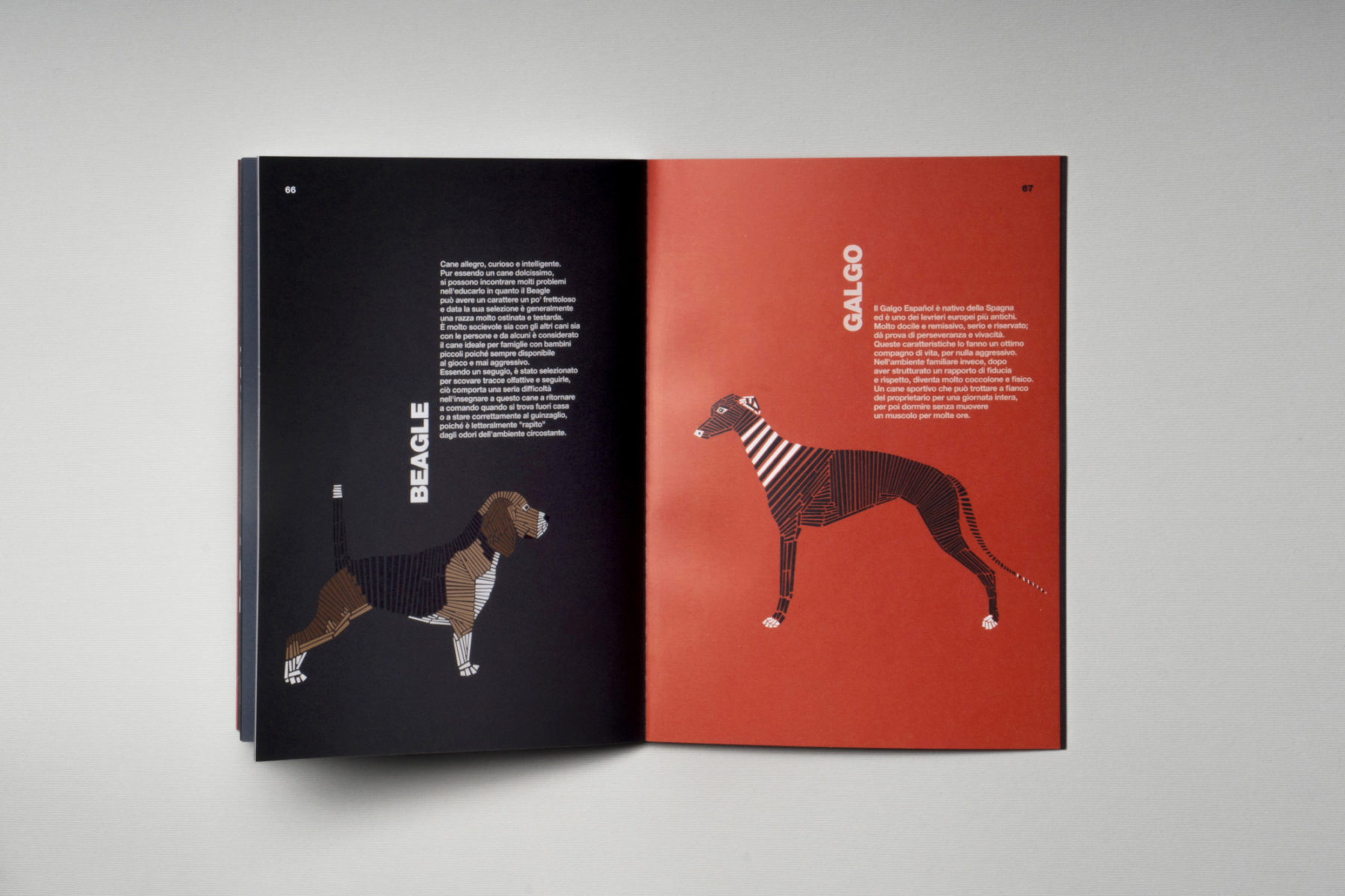 naomi turco Fifty dogs with graphic lines 11