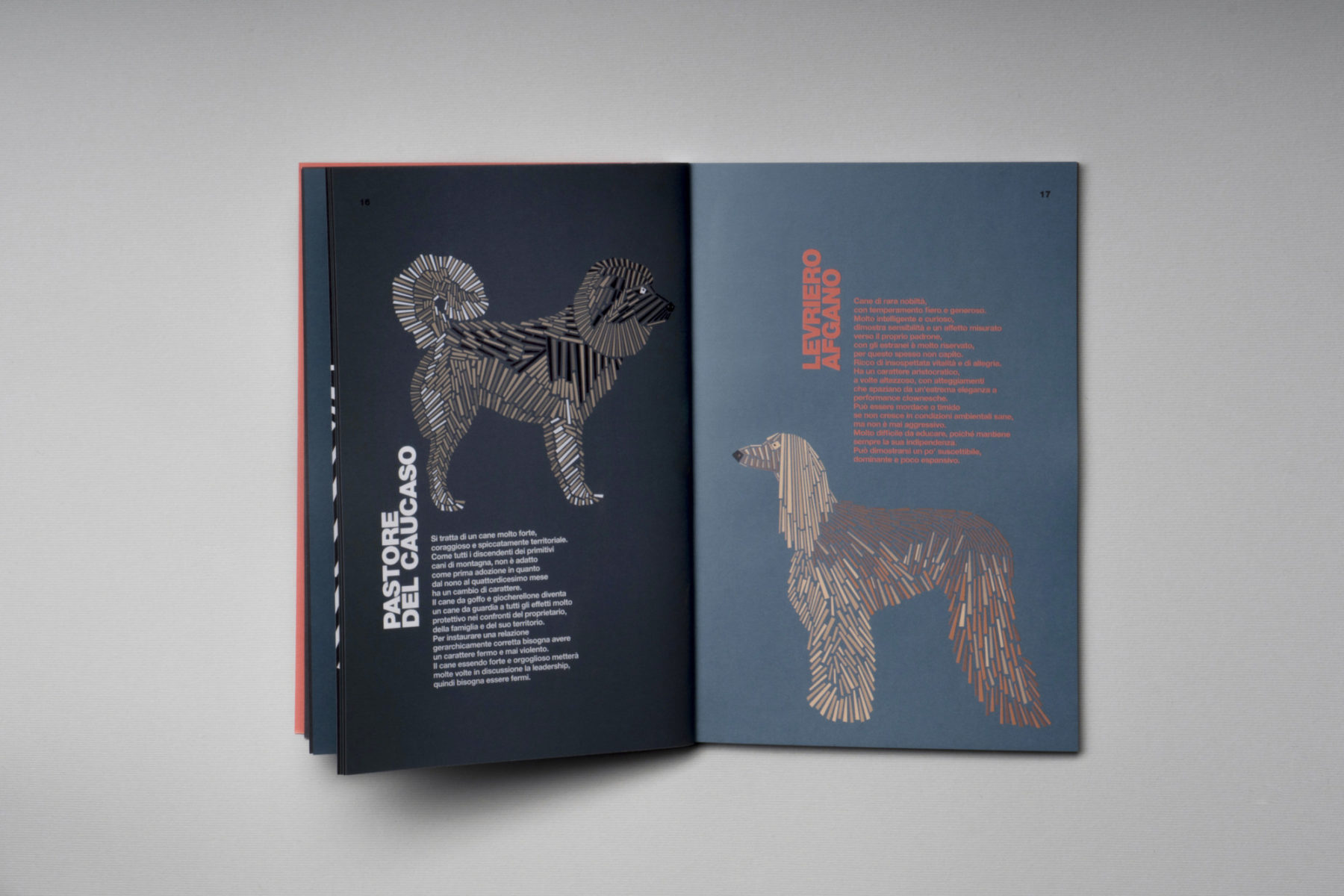 naomi turco Fifty dogs with graphic lines 7