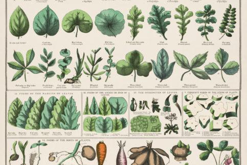 Botanical Education Charts rawpixel 2