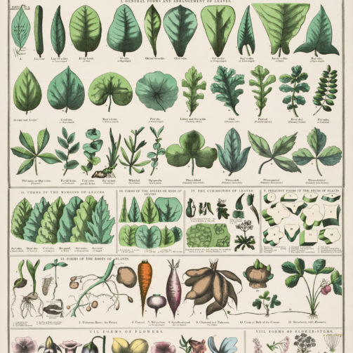 Botanical Education Charts rawpixel 2